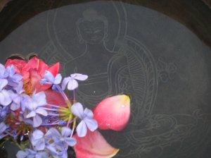 La Voce del Carro Particolare Buddha