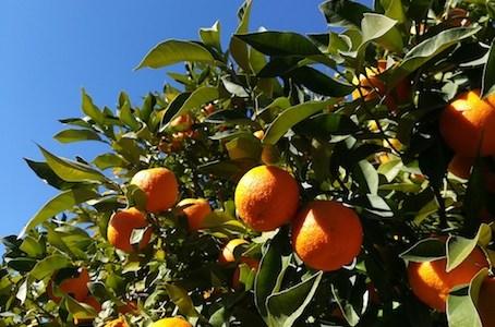 arancio | lavocedelcarro.it