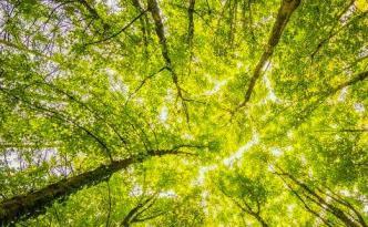 alberi | lavocedelcarro.it