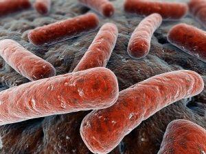 Mycobacterium tuberculosis, l'agente eziologico della TBC