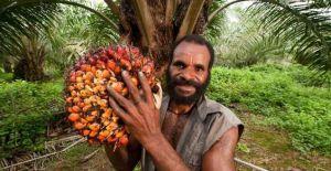 olio di palma_