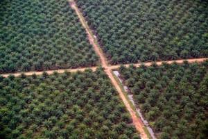piantagioni-palma-da-olio