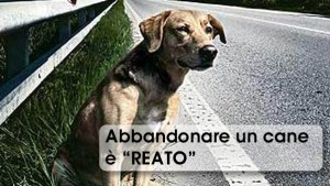 ABBANDONARE-UNA-CANE-E-REATO