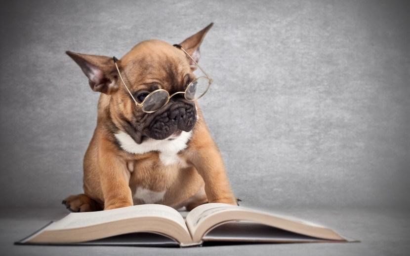 libri_cani