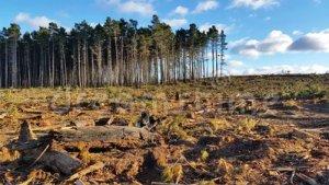 La deforestazione, o disboscamento, consiste nell'abbattimento di una consistente porzione di verde per motivi commerciali, per ottenere nuovi terreni da destinare all'agricoltura e all'espansione urbana.
