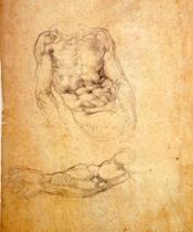michelangelo_studio-di-torso-virile-e-braccio