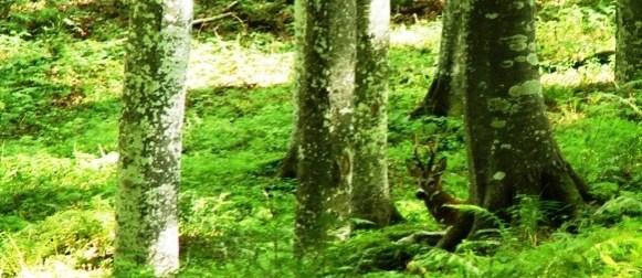 Legno, carbonio, biodiversità: studio CNR per potenziare l'azione delle foreste europee