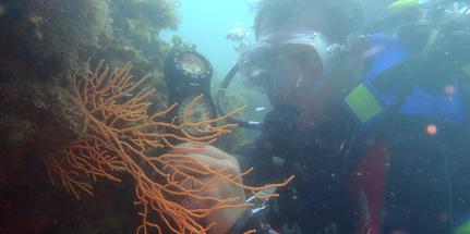 Egadi: on line 28 itinerari subacquei dell'ENEA