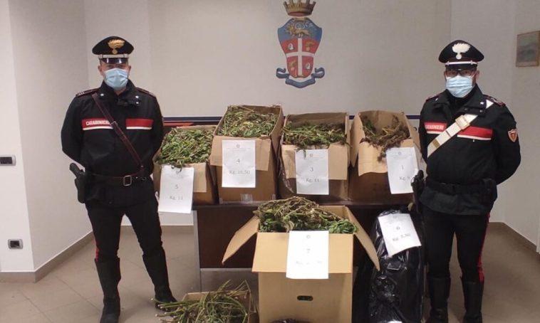 Castel Ivano: maxi sequestro di marijuana. 87 kg di droga in un capannone abbandonato. Nei guai 41enne del luogo