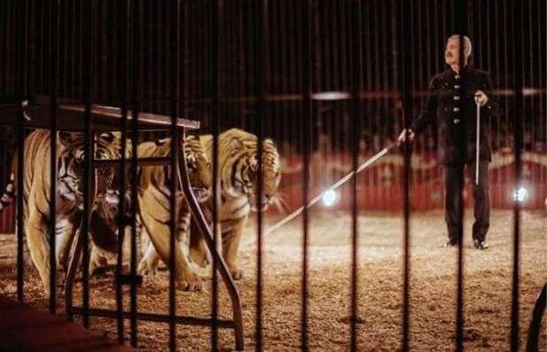 Rissa tra animalisti e dipendenti del circo Marina Orfei a Surbo in provincia di Lecce