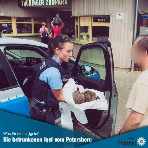 Turisti irresponsabili abbandonano una bottiglia di liquore nel parco, risultato: due ricci in coma etilico