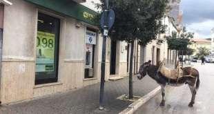 FOTONOTIZIA - Parcheggia l'asino e si reca in banca. Diventa virale la foto sul web