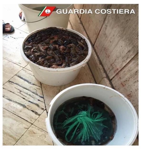 Deturpamento dell'ambiente marino: sequestrati 20 kg di oloturie