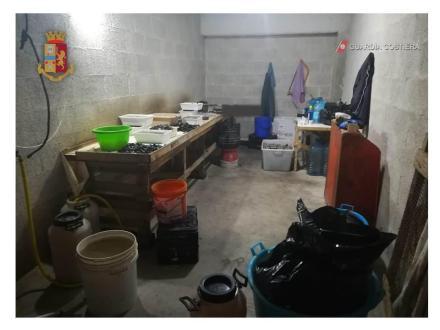 Operazione congiunta della Polizia di Stato e della Guardia Costiera, sequestrati altri tre quintali di cozze all'interno di un box