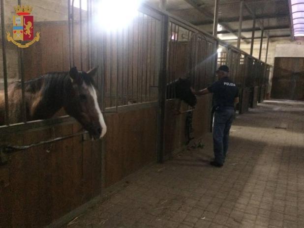 Manduria, un cavallo ferito ed altri custoditi in precarie condizioni igieniche, denunciato il proprietario del maneggio per maltrattamenti di animali