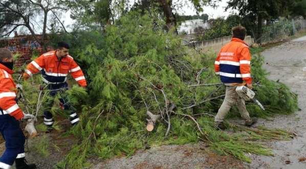 Albero di pino cade sbarrando la strada via per Mare