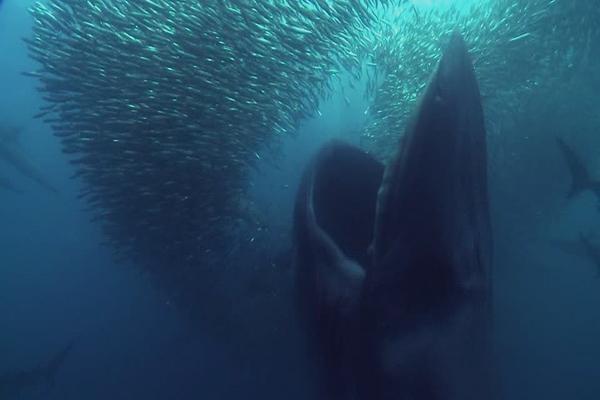 Maruggio - Quando la Balena si mangiava le sardine.