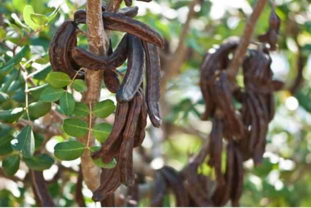 La Cornula (Carrubo) nella tradizione