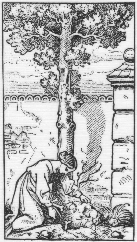 Il Ginepro tra tradizione, usi medici e magici: curiosità nel salento e altrove