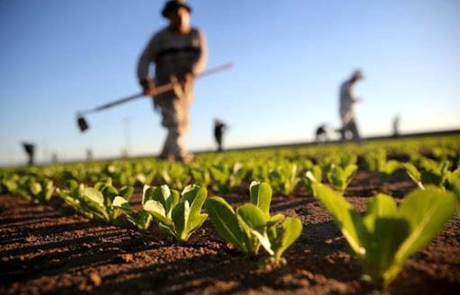 """Puglia, l'agricoltura non si ferma: """"Fondamentali per il Paese"""""""