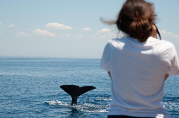 SailGp, Jonian Dolphin Conservation e WWF per la salvaguardia dei cetacei