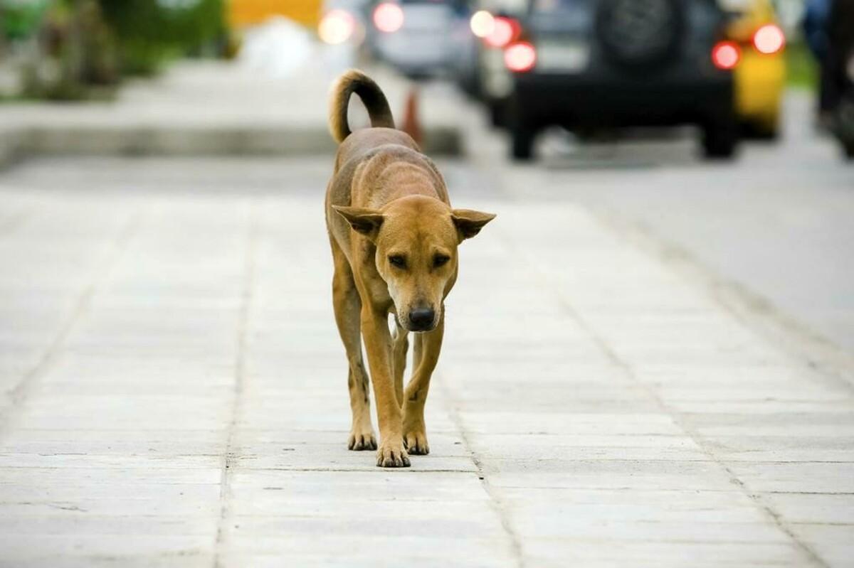 Animali abbandonati o maltrattati, arriva il numero d'emergenza h24