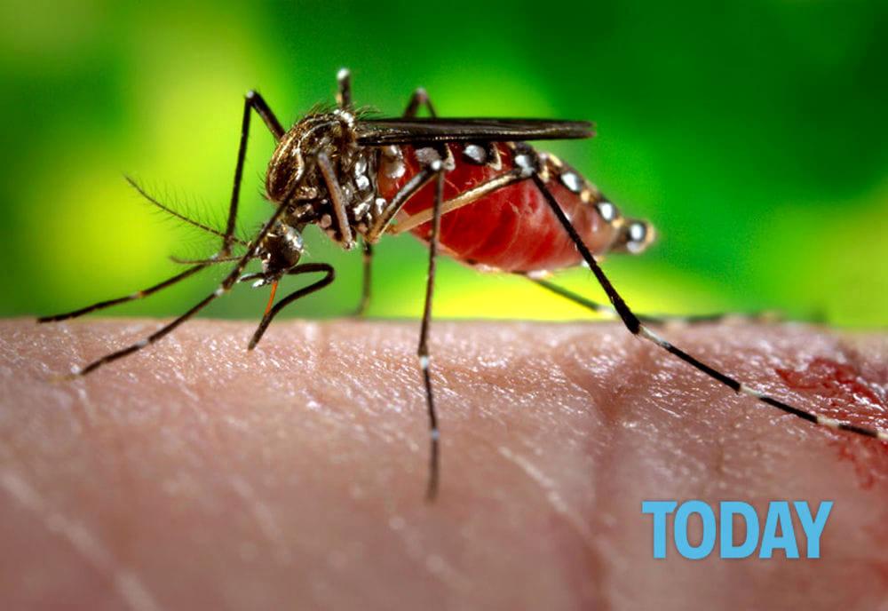 Casier, la lotta alle zanzare si fa seria: blister ecologico in distribuzione ai residenti