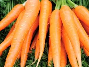 carottes santé