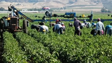 Photo of Forti sconti sul costo del lavoro: imprenditori, fate attenzione alla responsabilità solidale
