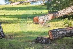 tala-pinar-piedrahincada-10