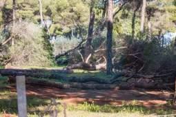 tala-pinar-piedrahincada-3