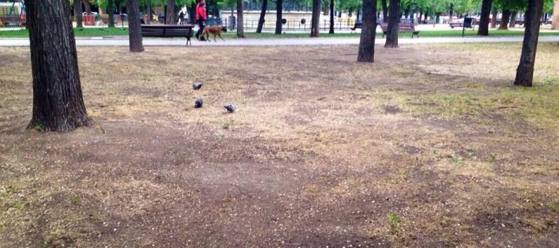 Jardines Parque del Egido Pinto
