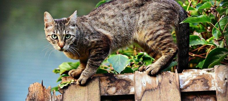 la alimentación de los gatos en Pinto
