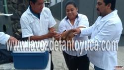 Mil 250 vacunas por día aplica el centro de salud para prevenir la rabia en mascotas | LVDT