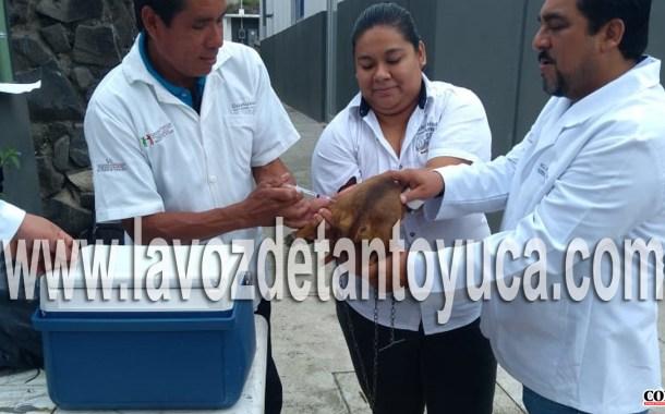 Mil 250 vacunas por día aplica el centro de salud para prevenir la rabia en mascotas