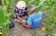 Sexagenario cae de árbol y se lesiona, en Tantoyuca