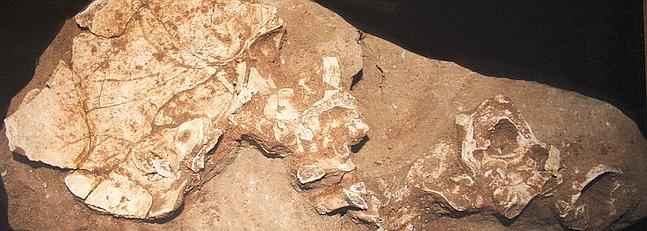Los arqueólogos del Cómico presentan los restos del gaditano más antiguo