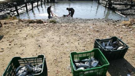 cultivos marinos integrales