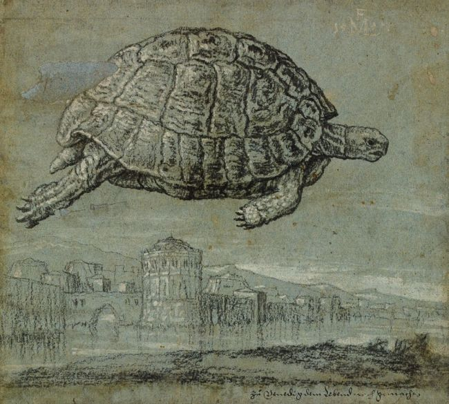 Melchior Lorck, Tortoise and view of a walled, coastal town,155