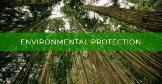 Common law remedies for the environmental protection