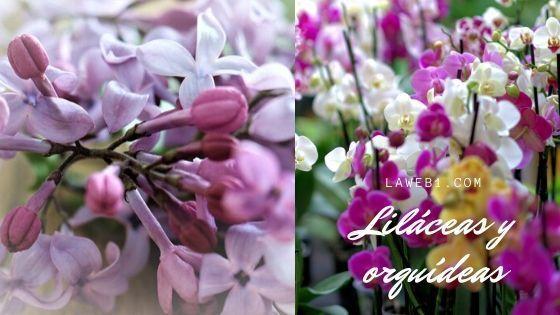 lilaceas y orquídeas