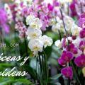 liláceas y orquídeas