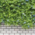 Decoración con plantas trepadoras 2