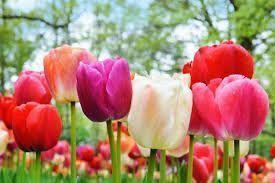 Flores para el jardín 7