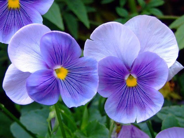 Flores para el jardín 4
