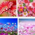 mantener flores frescas