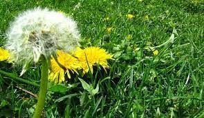 quitar malas hierbas del jardín