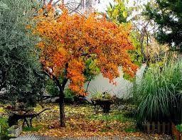 especies para plantar en otoño