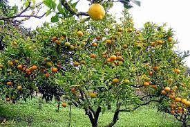 ¿Te gustaría tener frutales en tu casa? 2