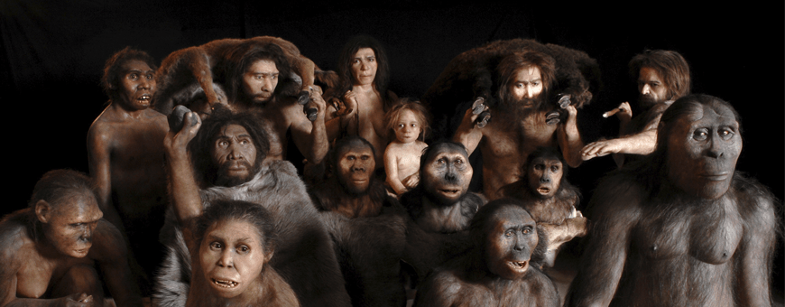hominids & proto-humans